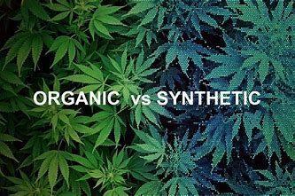 Orgainic vs Synthetic Hemp