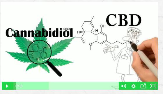 New Site Buy Cbd Oil Global