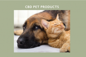 Cbd for Pets in Weybridge